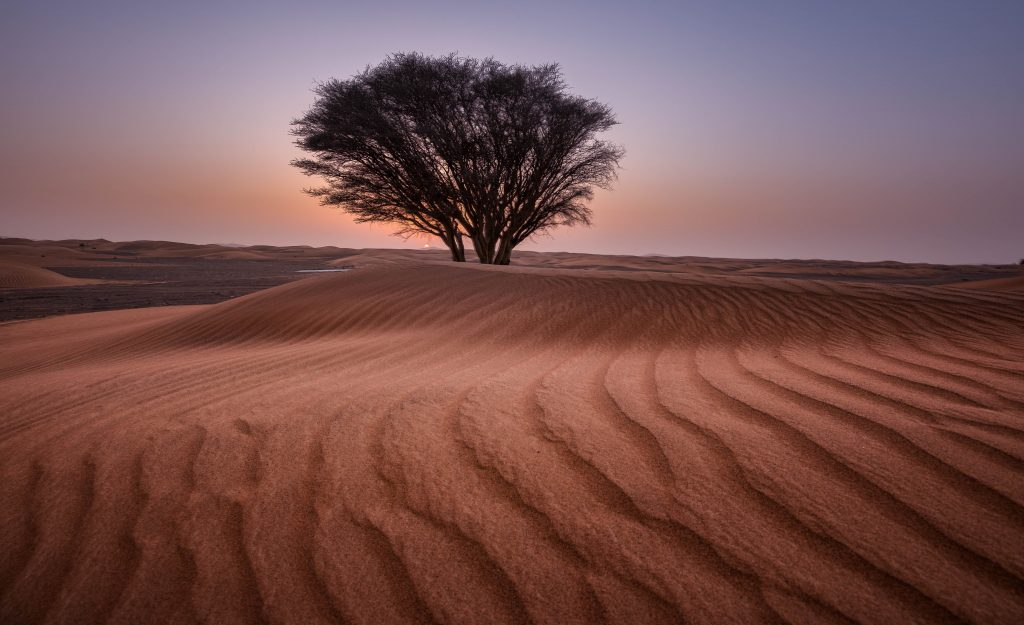 arid barren dawn tree